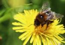 wenn Biene Blume nicht mehr kann Schlüsselfeld Bienen Imker Honigbienen